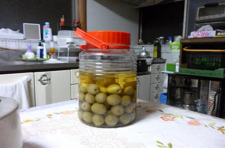 梅酒(文:印刷製本部 井上)